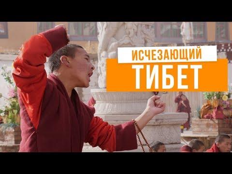 Тибет: интервью с живым Буддой и город-монастырь на 10 000 монахов (видео)