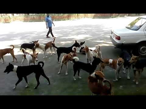 Dogs  Breeding । Street Dogs  Breeding Video । New Look