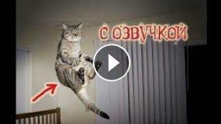 Приколы с котами с озвучкой
