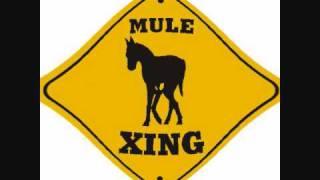 Gov't Mule w/ Jackie Greene ol' 55