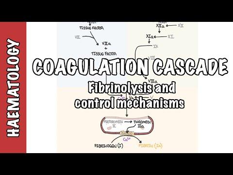Kaskada krzepnięcia i fibrynoliza - czynniki krzepnięcia, mechanizm regulacji i kontroli