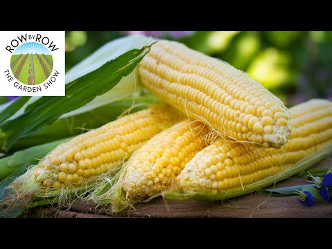 , title : 'What is the MOST TASTY SWEET CORN variety?