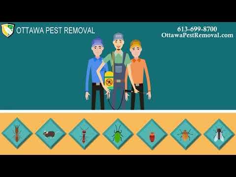 Pest Control Ottawa NCR | Licensed Exterminators