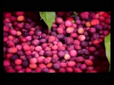 Ud Ja Panchhi (Kumaoni Folk Song) - Ki Bhalo Tero Mann