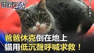「冷漠貓」救一命!爸爸休克倒在地上貓用低沉聲呼喊求救關鍵時刻20180327-6朱學恒馬西屏