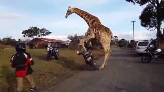 SMESHNYE ZHIVOTNYE PRIKOLY S ZHIVOTNYMI  Fun with the animals Funny animals  Super pictures MosCatal