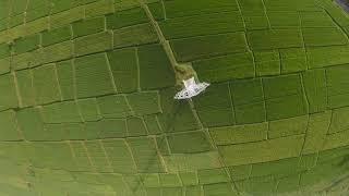 Morning Cruising (FPV Drone)