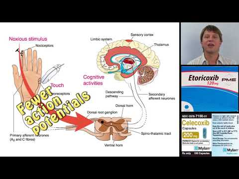 Umiarkowane żylne oznaki nadciśnienia śródczaszkowego
