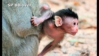 Poor Baby Monkey Was Steal To Adopt By Crazy Psycho Macaque - Amara 18