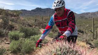 Enjoy a taste of riding among the giant saguaros on narrow singletrack.