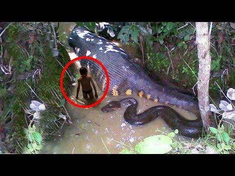 Топ 10: Най-големите змии в света