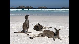 ESPERANCE, Western Australia. MY AGRO