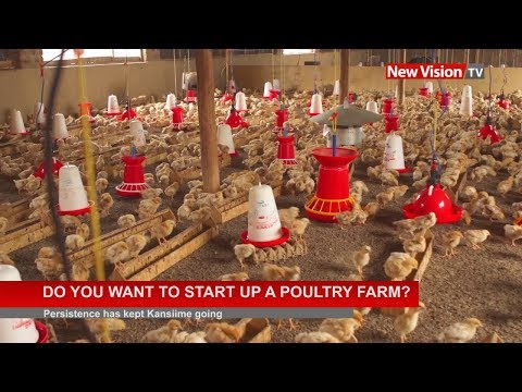 , title : 'Do you want to start up a poultry farm?