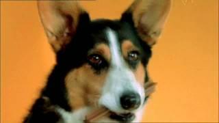 doggy dentures pedigree dentastix commercial Самые лучшие видео