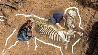Most BIZARRE Skeletons Ever Discovered!