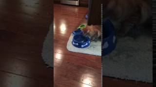 Cat plays in dog's water