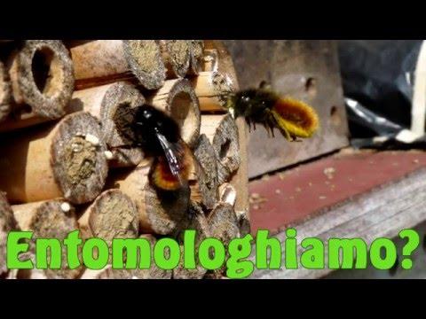 Bug Hotel - Entomologhiamo?