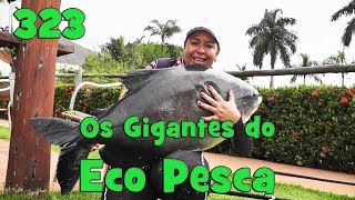 Programa Fishingtur na Tv 323 - Pesqueiro Eco Pesca