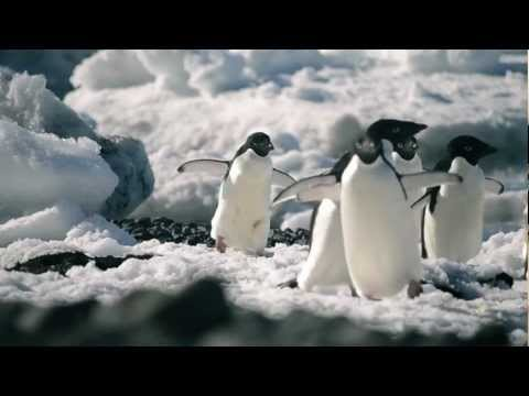 The REAL Deep South Has Penguins!