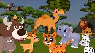 Divoká zvířata - Zvuky divokých zvířat  pro děti