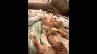 faze tari copilul si pisica