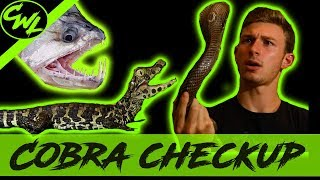 COBRA CHECK UP, VAMPIRE FISH FEEDING, & MORE!