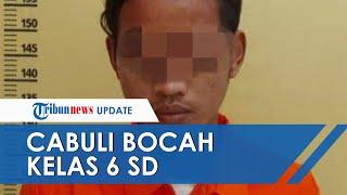 POPULER Cabuli Siswi Kelas 6 SD di Lapangan Bola, Seorang Pemuda di Kampar Ditangkap Polisi