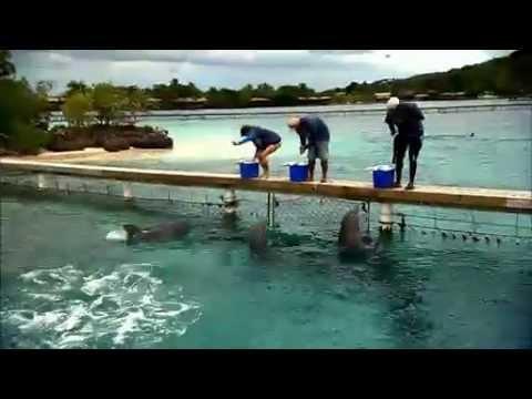 Dolphin Ecards These brainy marine mammals can read plan ahead..