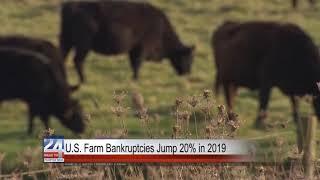 U.S. Farm Bankruptcies Jump 20% in 2019
