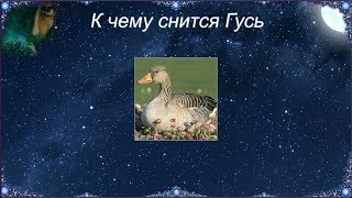 К чему снятся гусята. ловить гусенка