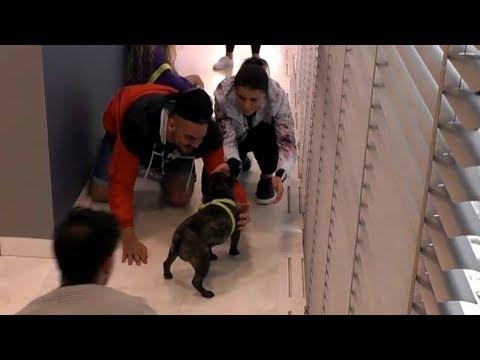 Pies Igora w Domu Wielkiego Brata! To zadanie nie było łatwe [Big Brother]