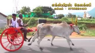 Rekla Race-2017/10/27 Theni District Gudalore(கரிச்சான்)