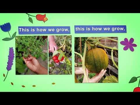 Sing-along to 'This is How We Grow' - Golden Toad Theatre