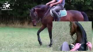 VIDEO základní principy uvolnění koně