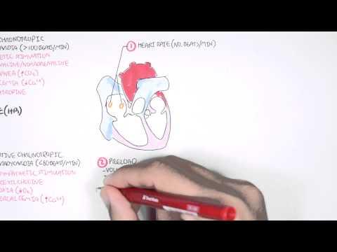 Metzger und dergleichen zur Behandlung von Hypertonie