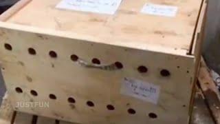 В аэропорту не решались открыть деревянный ящик,через 7 дней содержимое повергает всех в шок