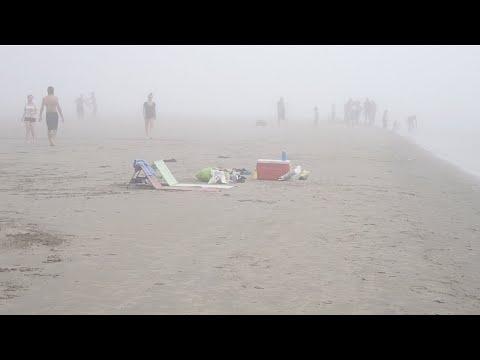 Чайка умыкнула еду на пляже