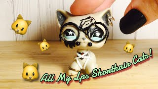 Lps Shorthair Free Video Search Site Findclip