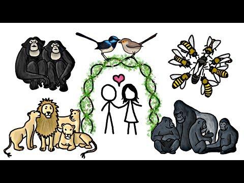 Jsou zvířata skutečně monogamní?