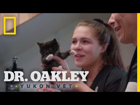 Kittens Galore | Dr. Oakley, Yukon Vet