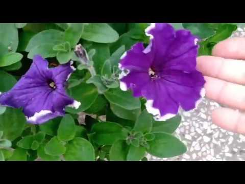 Gardening 🍄hacks // Gardening Tips and Tricks for beginners