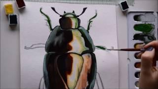 Watercolor Speed Painting ''Macraspis Chrysis'' | Beetle Series