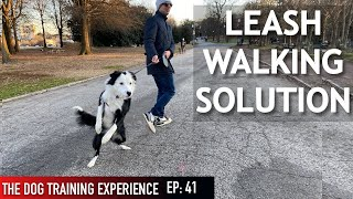 How I'm Coaching My Canine To Stroll On Leash (Some folks may not agree with this!)