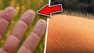 Trendy video TOP 5 Čo možno neviete o svojom tele