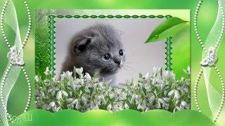 Весна!!! 1 марта день кошек! Серенада от исполнителя Божья Коровка, Когда весна стучит в окно