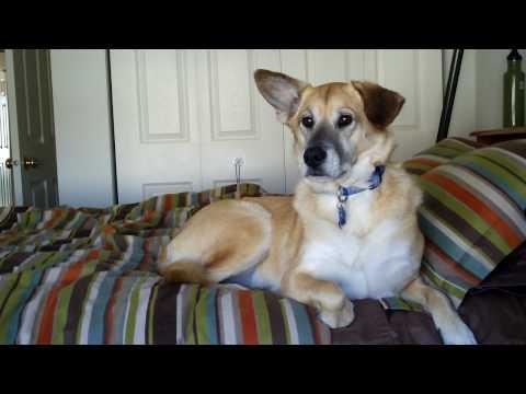 Video of Dog Teaser