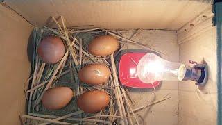 DIY - Homemade Incubator || HOW TO MAKE AN EGG INCUBATOR || HATCHING CHICKEN EGGS