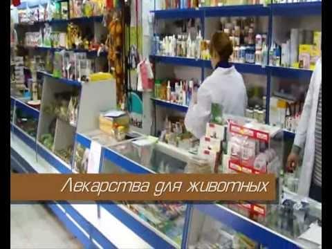 Конский возбудитель где купить в аптеке