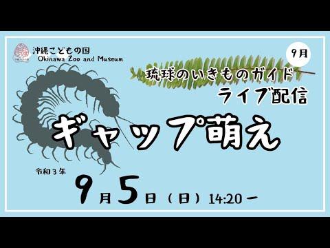琉球のいきものガイド★ライブ配信【ギャップ萌え】Animal Guide-Creatures of Ryukyu Arc