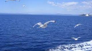 Универсальный поплавки для ловли на море